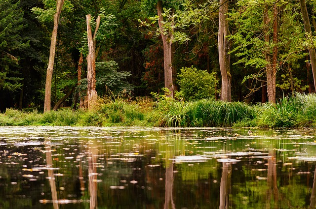 Rezerwat przyrody Jezioro Drużno. Tajemnice natury iświata dawnych Prusów